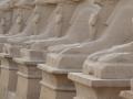 Sphingen-Alle in Luxor ¦ Studienreise nach Ägypten (2009 & 2011)